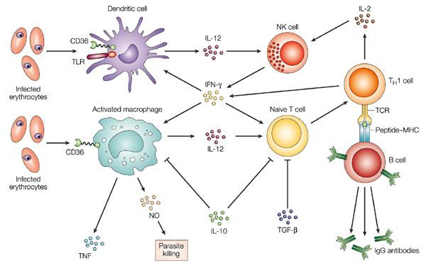 immunity2